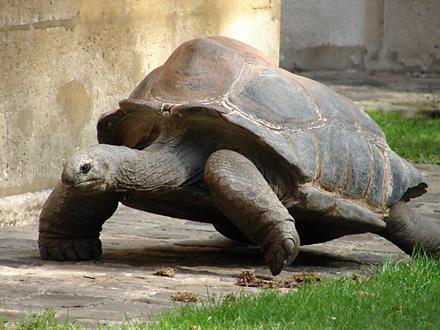 Journee de la lenteur tortue